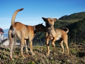 Kedua anjing ini menemani rombongan kami hingga ke puncak gunung. Dok: Pribadi