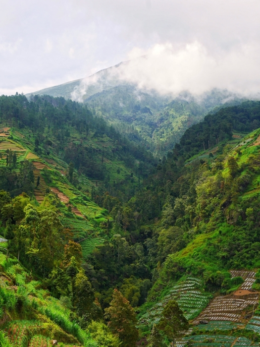 Lereng gunung Sumbing